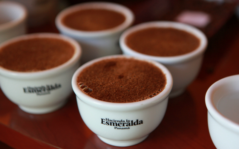 Cups-of-Brewed-Esmeralda-Geisha-601